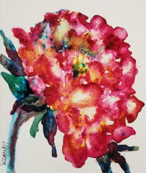 Julia's Rose Peony